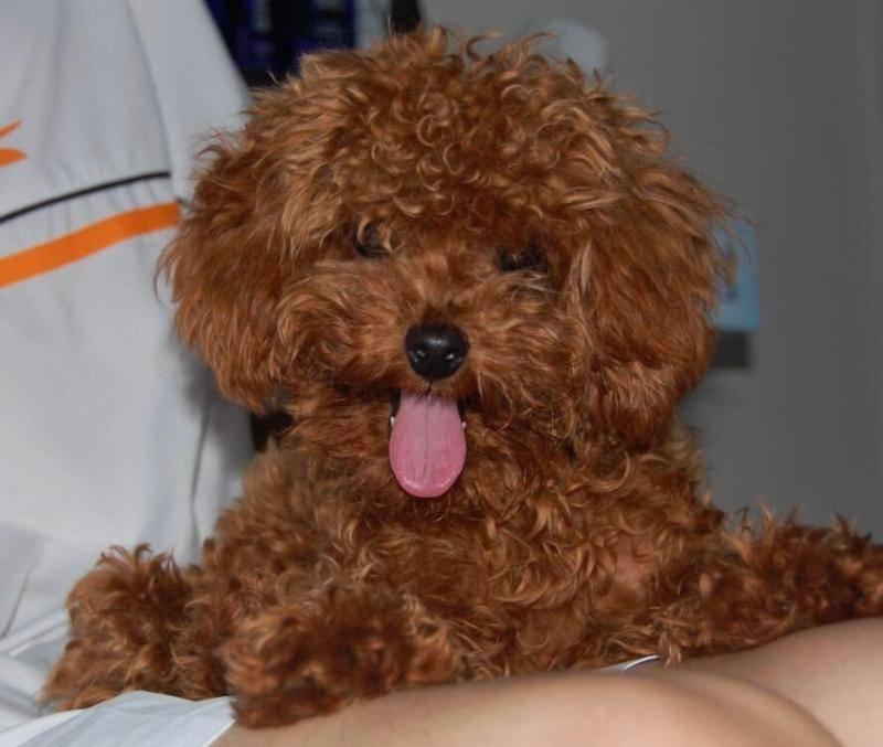狗狗肠胃炎症状