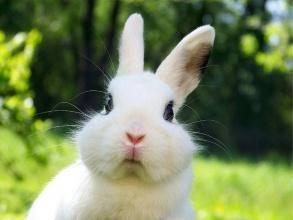 兔子一天喂几次?少吃多餐,均衡搭配-轻博客