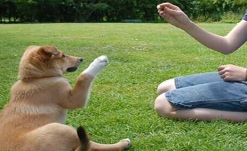 训练狗狗的方法大全