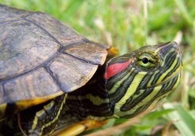巴西龟冬天怎么养