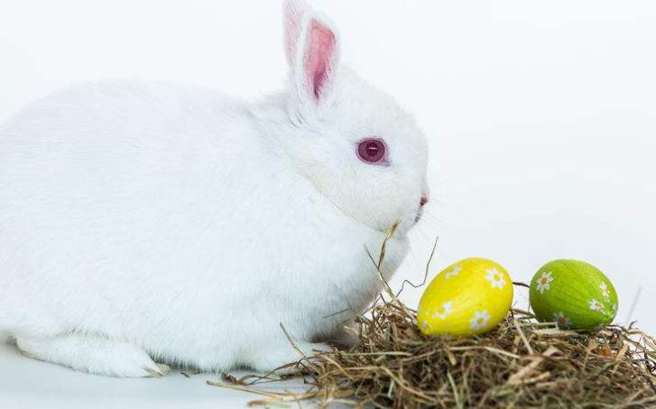 宠物兔品种,哪些品种比较好呢!-轻博客