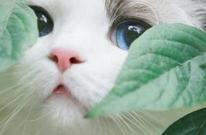 猫抓了要不要打疫苗