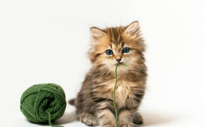 小奶猫怎么养