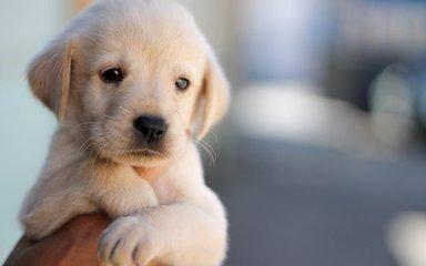小狗吃多了呕吐怎么办