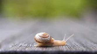 蜗牛吃什么长的快