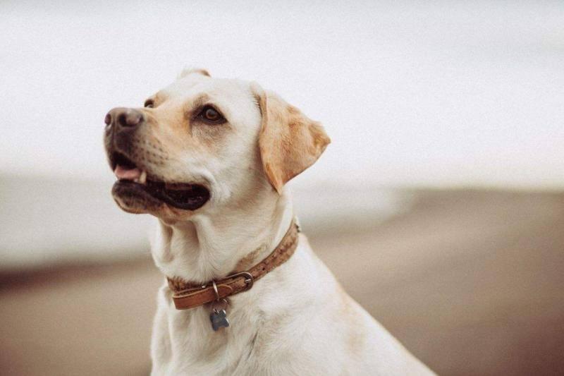 狗狗黑色的便便是怎么回事?可能是这些原因