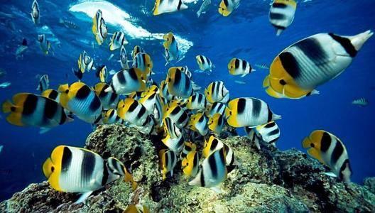 热带鱼养殖