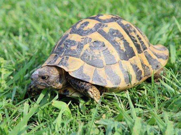 乌龟为什么长寿