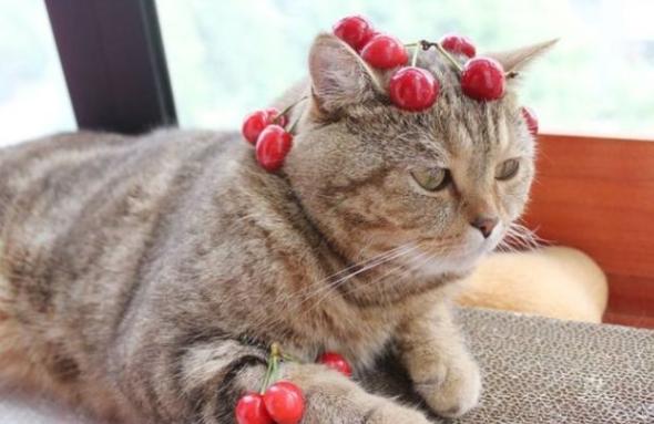 猫可以吃水果吗