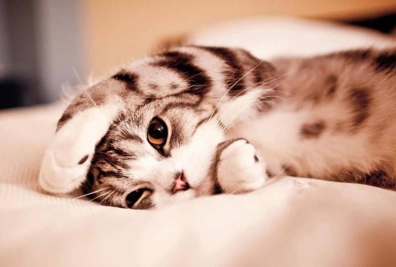 猫咪吃蛋黄有什么好处