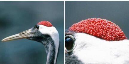 鹤顶红是什么
