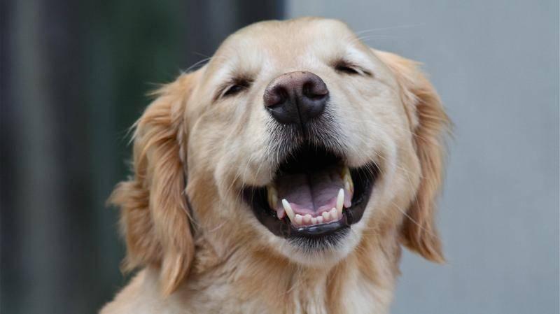 狗狗疫苗怎么打