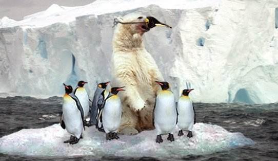 为什么北极熊不吃企鹅