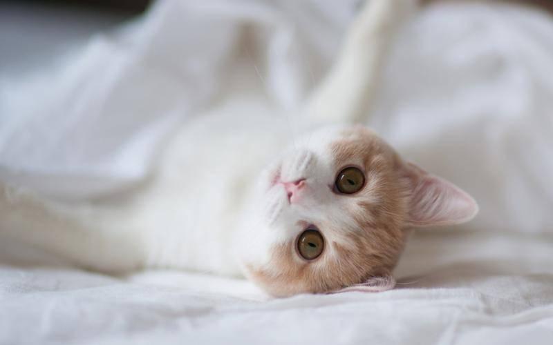 猫感冒的症状