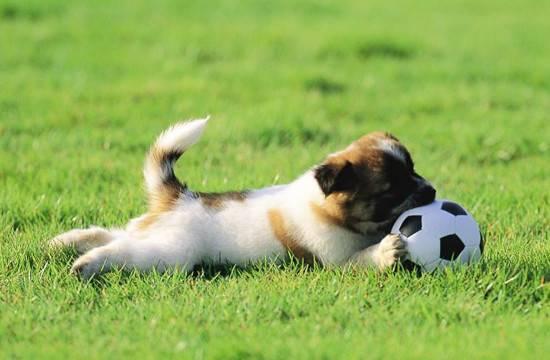 如何训练狗