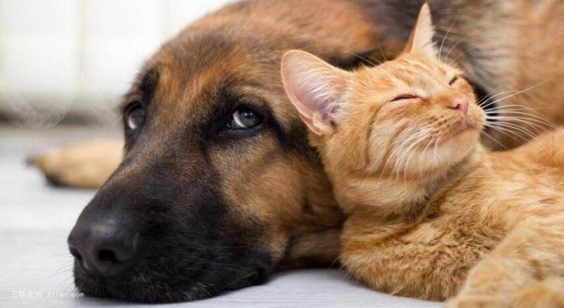 养狗好还是养猫好