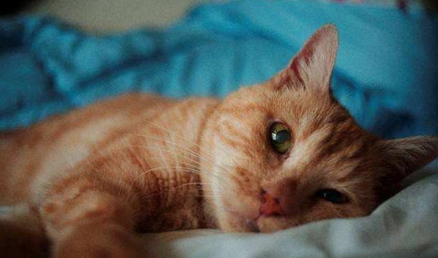 猫感冒能自愈吗