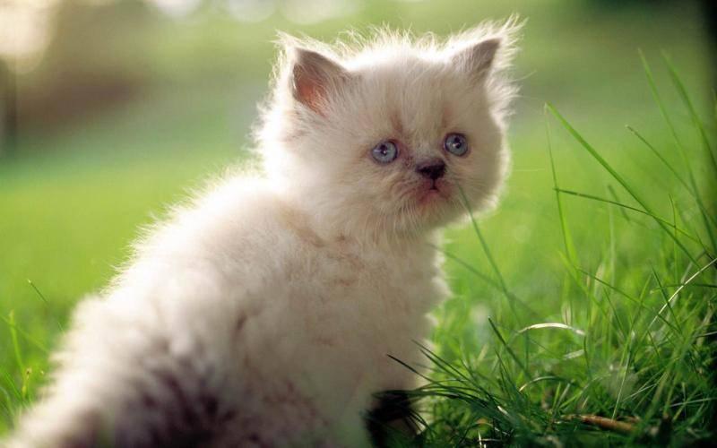 猫鼻支能自愈吗