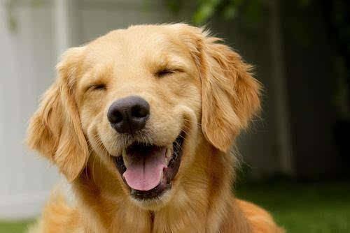 狗狗不爱喝水怎么办