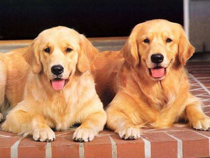 养什么狗比较好