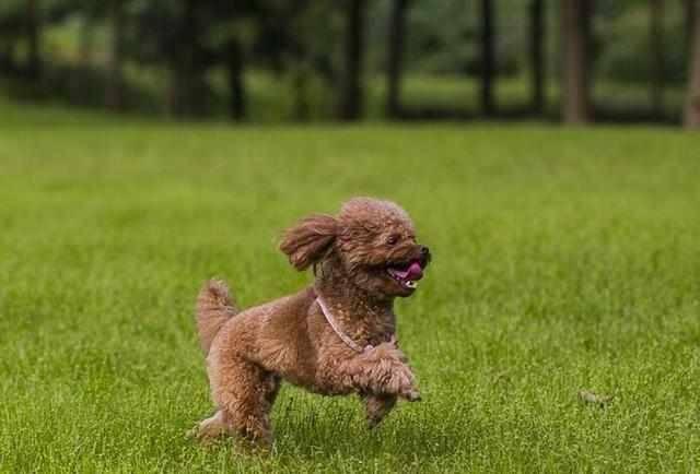 狗狗腹泻怎么回事?有多方面的原因会引发