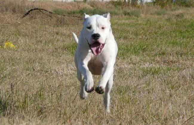 最好的猎犬是什么犬