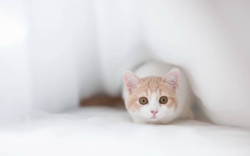 猫咪为什么会不吃猫粮?是猫粮不好吗?猫砂价格  猫粮 猫砂价格 猫咪 小猫 可爱猫咪图 第2张