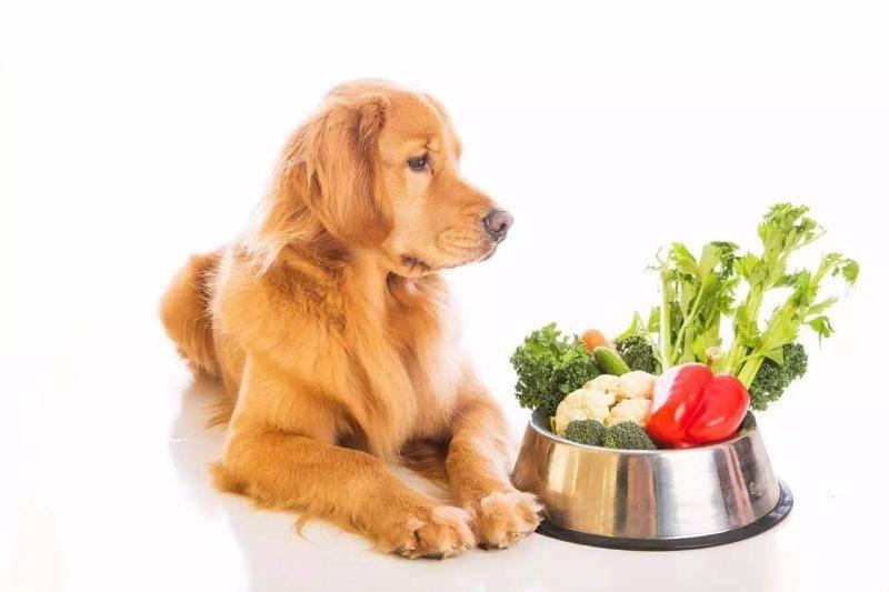 泰迪犬能吃水果吗_狗狗能吃西红柿吗?对人有营养的狗不一定有-我的宠舍