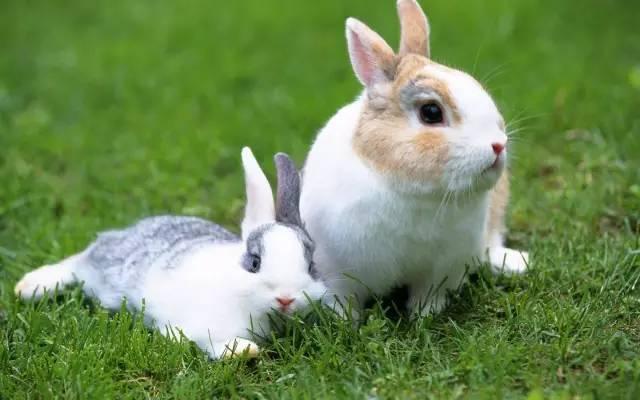 兔子拉稀怎么办,教你几招轻松处理-轻博客