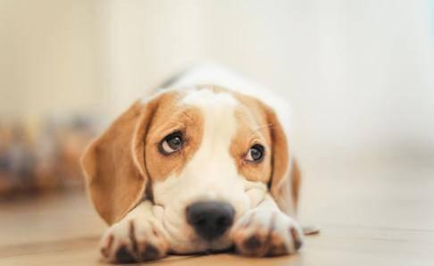 狗吃了老鼠药怎么解毒