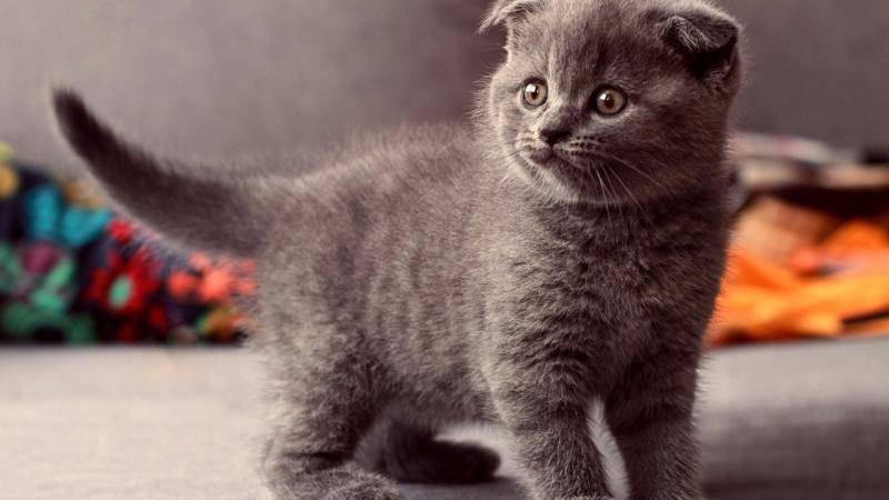 猫为什么不怕蛇