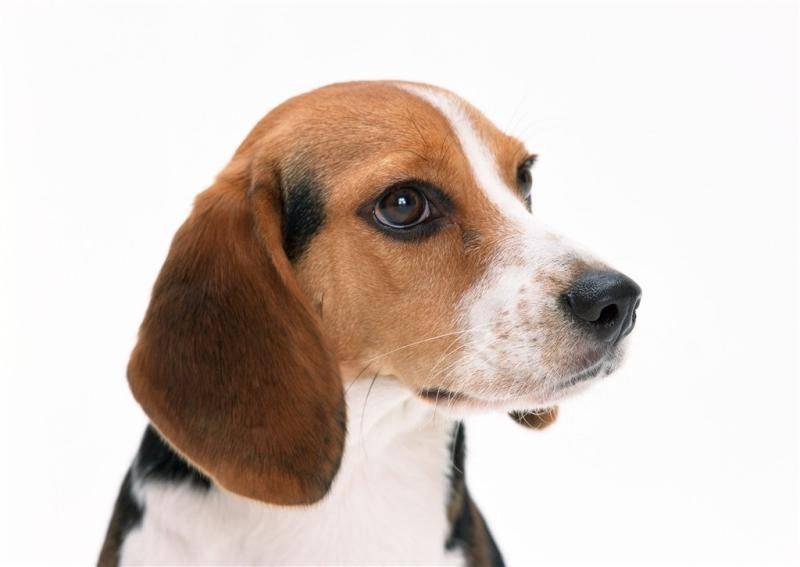 狗狗拉稀吃什么药