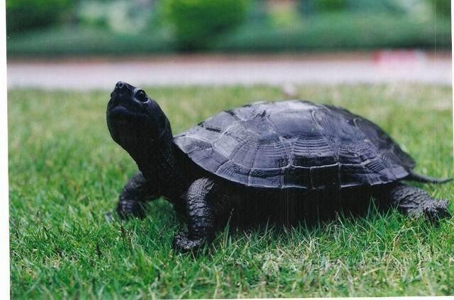 乌龟多久不吃东西会死?分时段来判断-轻博客