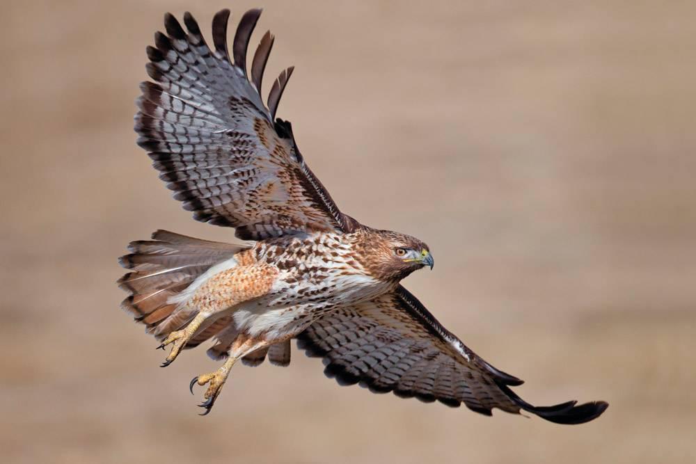 寿命最长的鸟