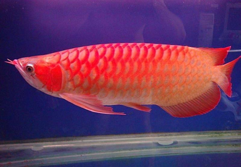 鱼喜欢吃什么