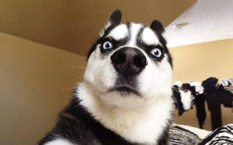 几种适合家养的中型犬,有你心仪的吗?-轻博客