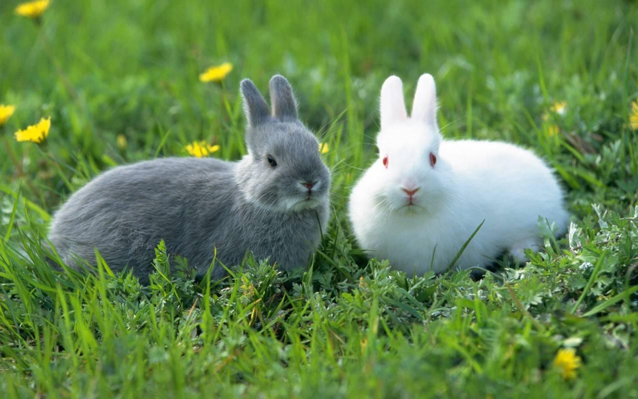 兔子的生活习性,会让你脑洞大开-轻博客