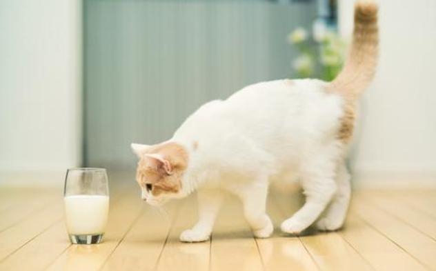 小猫咪需要补充营养吗?小猫咪喝牛奶  猫粮制作方法 猫砂制作视频 小猫喝牛奶 猫咪网 小可爱网 第2张
