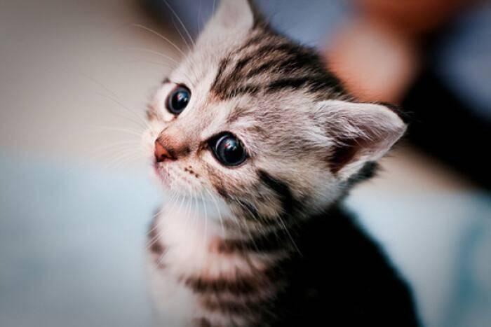 猫咪为什么会不吃猫粮?是猫粮不好吗?猫砂价格  猫粮 猫砂价格 猫咪 小猫 可爱猫咪图 第1张