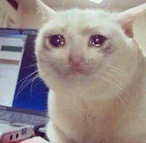 猫流眼泪是怎么回事