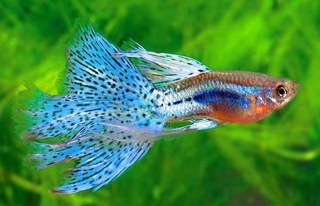 小型鱼缸适合养什么鱼_什么观赏鱼最好养?对于新手这几种就挺好的-我的宠舍