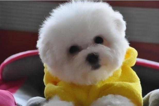 狗狗有泪痕是什么原因