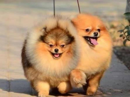 狗狗耳朵上长了螨虫怎么办?做好这几个步骤