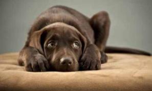 狗狗得抑郁症了怎么办