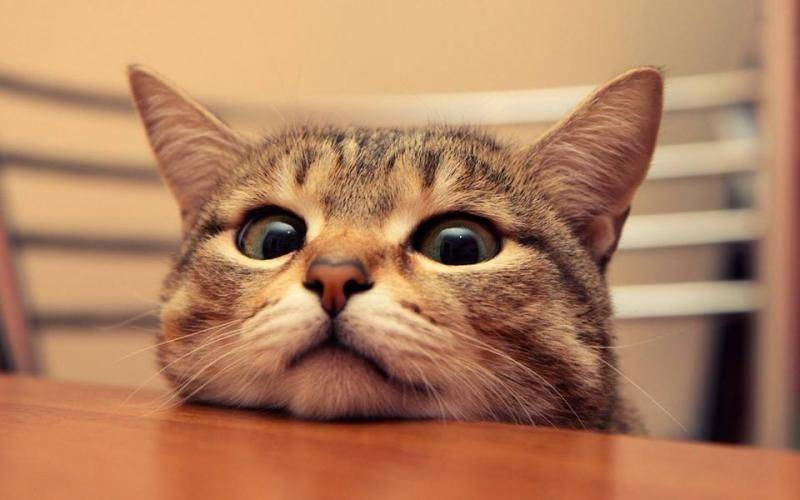 猫咪为什么会不吃猫粮?是猫粮不好吗?猫砂价格  猫粮 猫砂价格 猫咪 小猫 可爱猫咪图 第3张