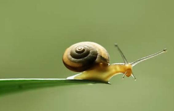 蜗牛喜欢吃什么