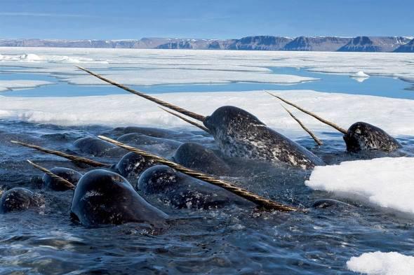 鲸鱼的种类