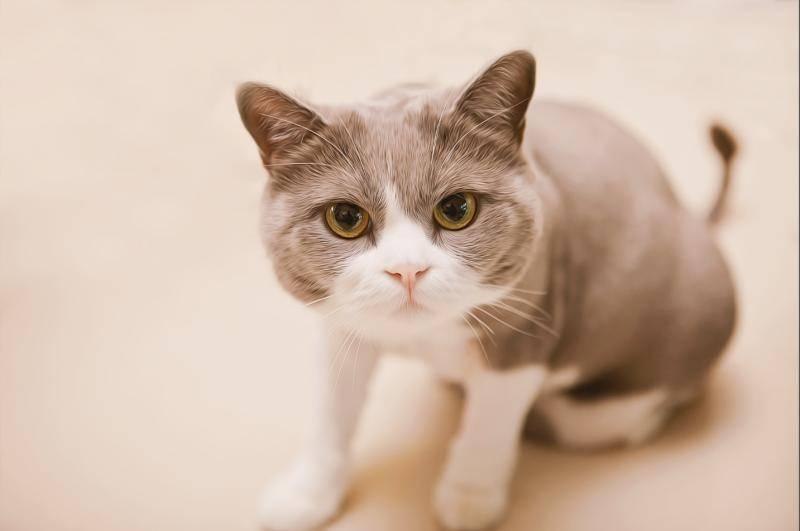 猫不吃不喝能活几天