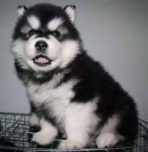 空运狗狗多少钱
