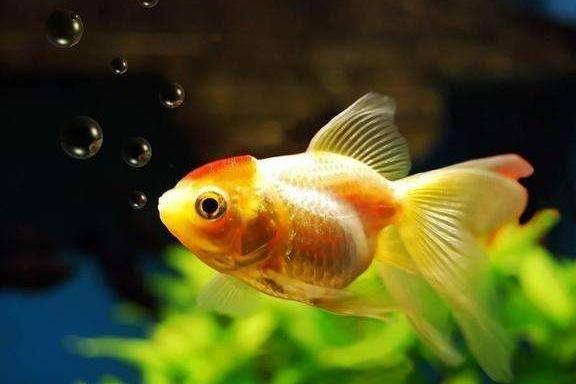 金鱼沉底不动什么原因